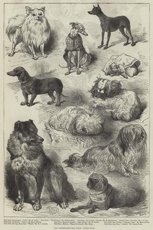 The Birmingham Dog Show, Prize Dogs