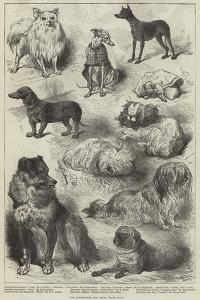 The Birmingham Dog Show, Prize Dogs by Harrison William Weir