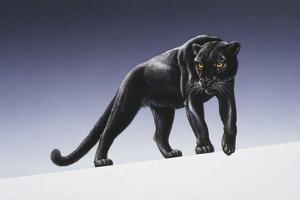 Black Panther by Harro Maass