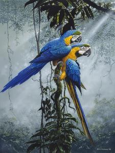 Blue and Yellow Macaws 2 by Harro Maass