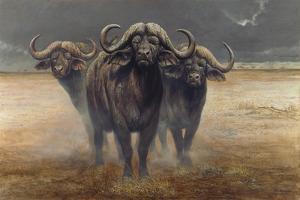 Cape Buffalos by Harro Maass