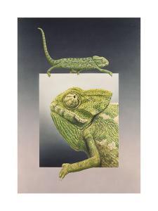 Chameleon by Harro Maass