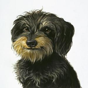 Dog by Harro Maass