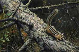 Eastern Chipmunk by Harro Maass
