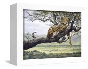 Leopard by Harro Maass