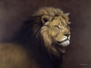 Lion Male by Harro Maass