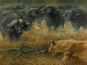 Lioness and Cape Buffalos by Harro Maass