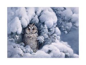 Long-Eared Owl by Harro Maass