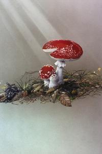 Mushrooms by Harro Maass