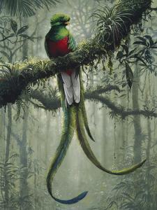 Resplendent Quetzal 2 by Harro Maass