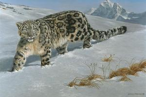 Snow Leopard by Harro Maass