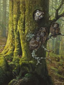 Tengmalms Owls by Harro Maass