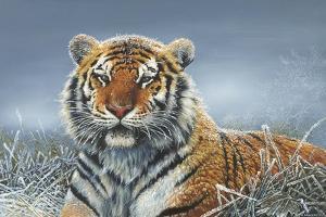 Tiger in Snow by Harro Maass