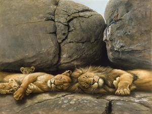 Two Lions Head to Head by Harro Maass