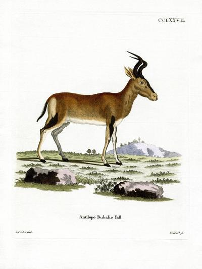 Hartebeest--Giclee Print
