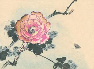 Japanese Peony Flower by Haruna Kinzan