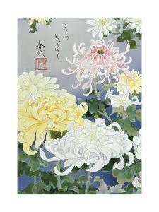 Kiku 12962 Crop 1 by Haruyo Morita