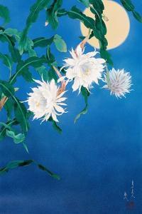Moon Flower by Haruyo Morita