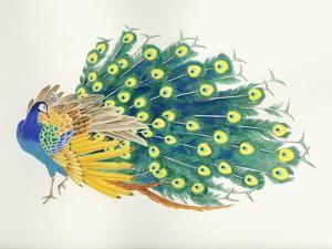 Peacock by Haruyo Morita