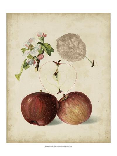 Harvest Apples I-Heinrich Pfeiffer-Art Print