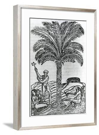 Harvest from 'Singularities of France Antarctique', by Andre De Thevet, 1558--Framed Giclee Print