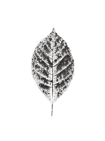Harvest Sentiments V BW no Words--Art Print