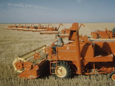 Harvest Story: Combines Harvest Wheat at Ranch in Texas-Ralph Crane-Photographic Print