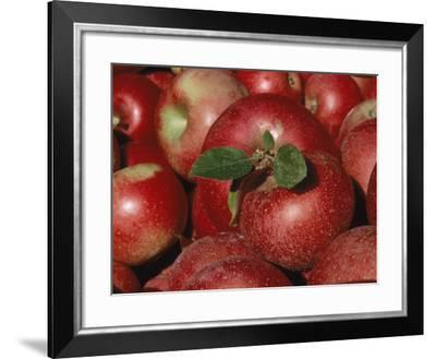 Harvested Apples-Sherwood Hoffman-Framed Photographic Print
