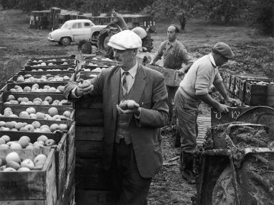 Harvesting Apples--Photographic Print