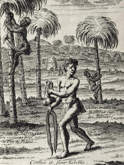 Harvesting La Palma Wine and Native Customs, Senegal from Lemaire's Travel, 1682--Giclee Print