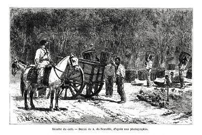 Harvesting the Coffee, Brazil, 19th Century-A de Neuville-Giclee Print