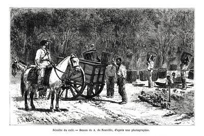 https://imgc.artprintimages.com/img/print/harvesting-the-coffee-brazil-19th-century_u-l-ptemmv0.jpg?p=0