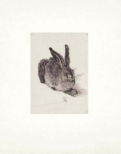 Hase - Nach Duerer- Zwicker-Collectable Print
