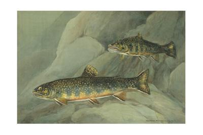 A Painting of a Pair of Brook Trout Swimming over Rocks by Hashime Murayama