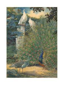 A Painting of a Pair of Indian Peafowl and a Pair of White Peafowl by Hashime Murayama