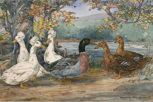 A Painting of Crested White Ducks and Rouen Ducks by Hashime Murayama