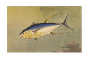 A Painting of the Rare Allison Tuna by Hashime Murayama