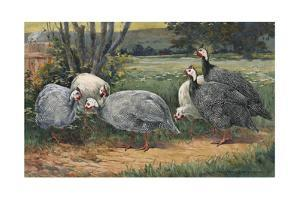 A Painting of White, Pearl and Lavender Guinea Fowls by Hashime Murayama