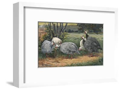 A Painting of White, Pearl and Lavender Guinea Fowls