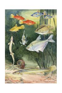 A Variety of Pygmy Fishes by Hashime Murayama
