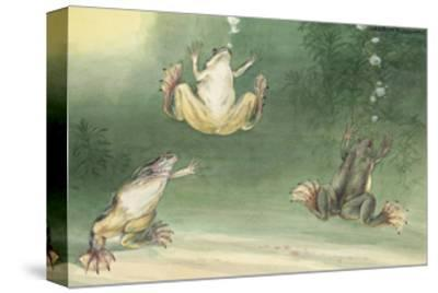 The Aglossa Frogs are Aquatic, Coming Up for Air Every Few Minutes