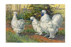 Three Silkies Stand with their Unusual Blue Flesh and Five Toes by Hashime Murayama