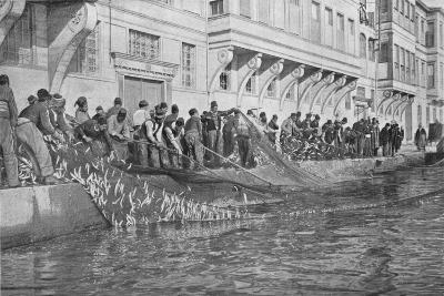 Hauling in a Grippo of 15000 Fish at Emirgian on the Bosphorus, c1901, (1903)--Giclee Print