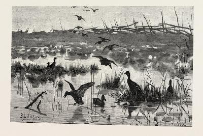 Haunts of Wild Ducks, 1882--Giclee Print