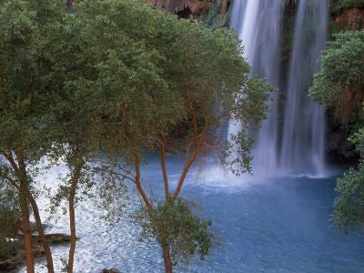 Havasu Falls Behind a Grove of Trees-Bill Hatcher-Photographic Print