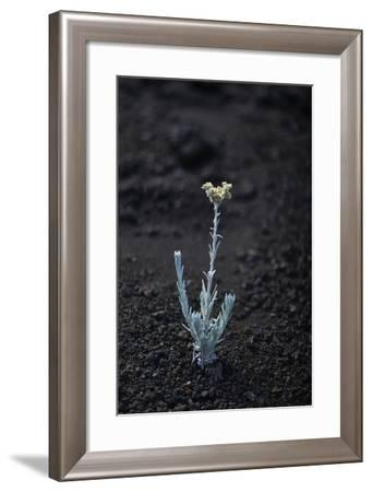 Hawaii Flower C-Chris Dunker-Framed Photographic Print