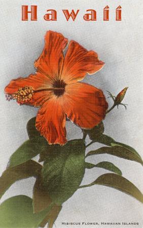 Hawaii, Hibiscus Flower