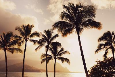 Hawaii, Kauai, Hanalei Bay, Palm Trees at Sunset-Design Pics Inc-Photographic Print