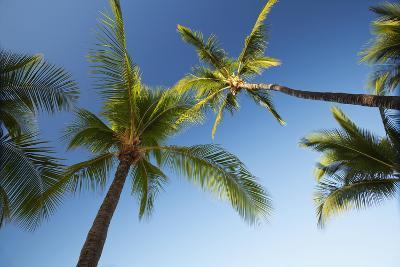 Hawaii, Lanai, Hulope Beach, Plam Trees from Below-Design Pics Inc-Photographic Print