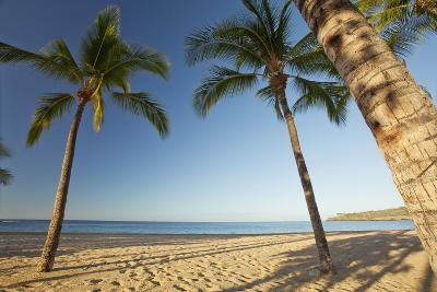 Hawaii, Lanai, Hulopoe Beach, Tall Palm Trees on a Beautiful Beach-Design Pics Inc-Photographic Print